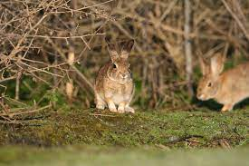 A deadly rabbit virus is killing pets and threatening wild species - The  Washington Post